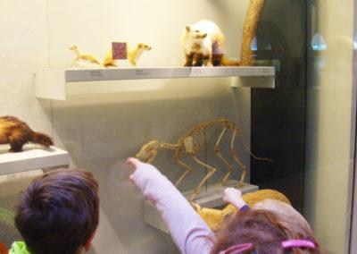 Ausflug Naturhistorisches Museum 02