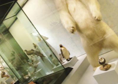 Ausflug Naturhistorisches Museum 04