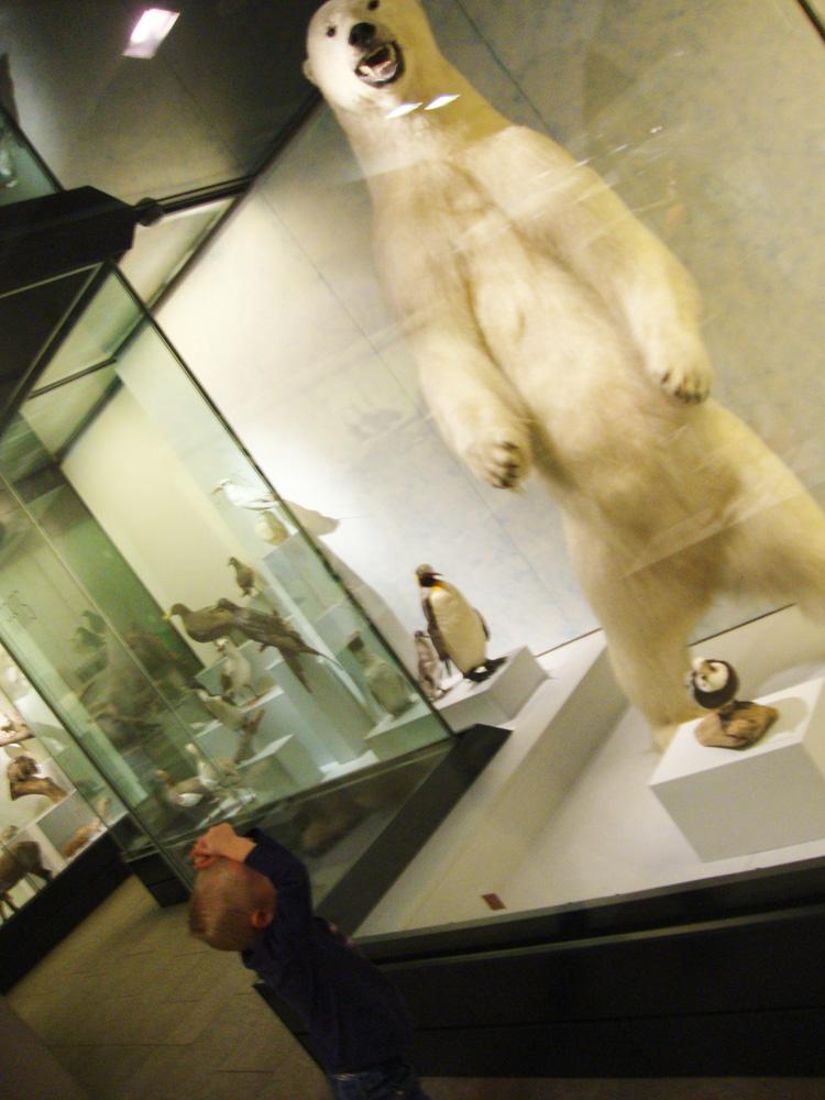 Ausflug Naturhistorisches Museum