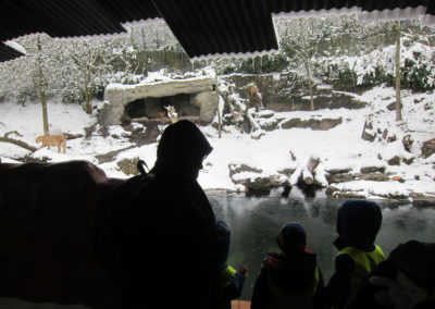 Zoo_19_6